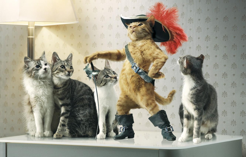 Обои шляпка, Кошка, кот. Кошки foto 9