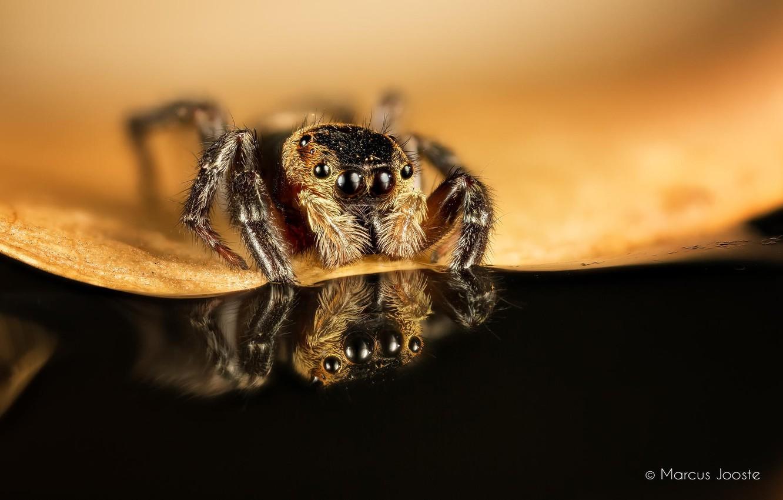 Обои насекомое, паук, лист. Макро foto 7
