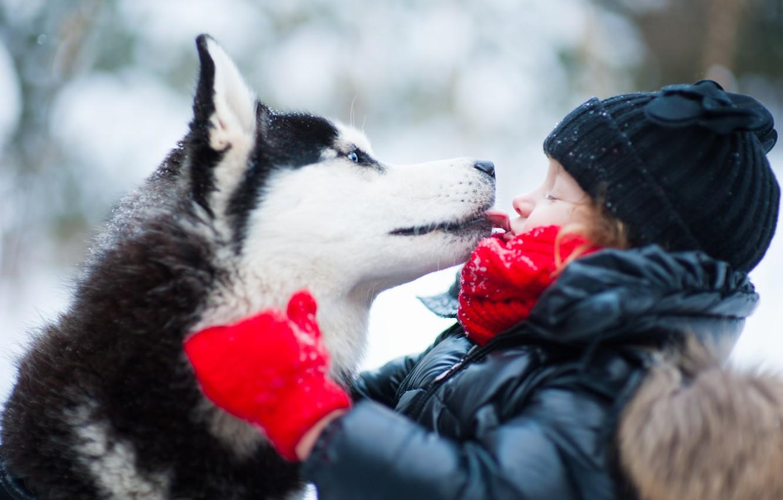 Фото обои зима, собака, ребёнок, хаски