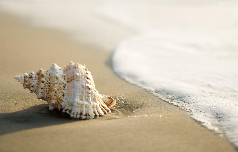 Фото обои песок, море, ракушка, прибой