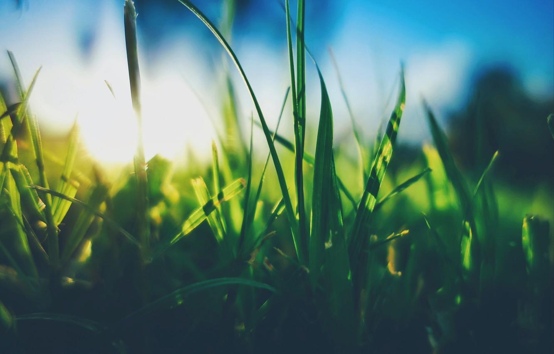 Фото обои Солнце, Небо, Трава, Растение
