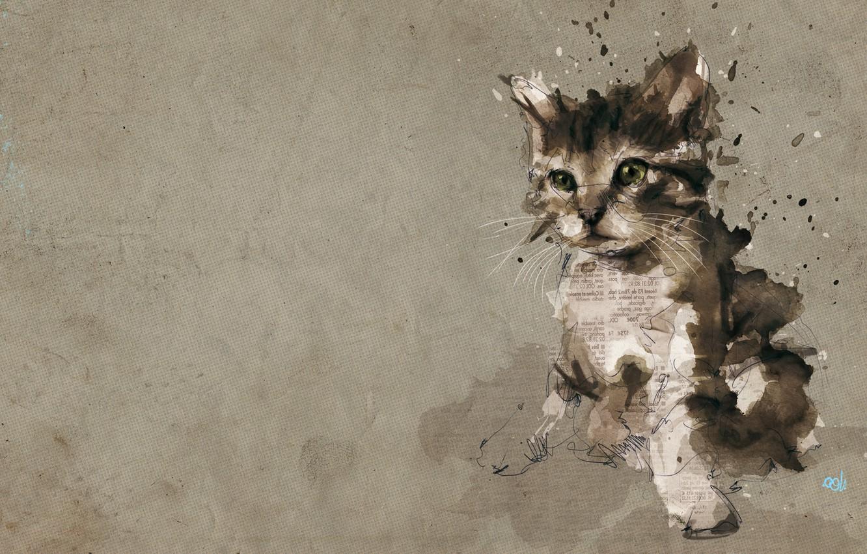 Фото обои котенок, обработка, газеты