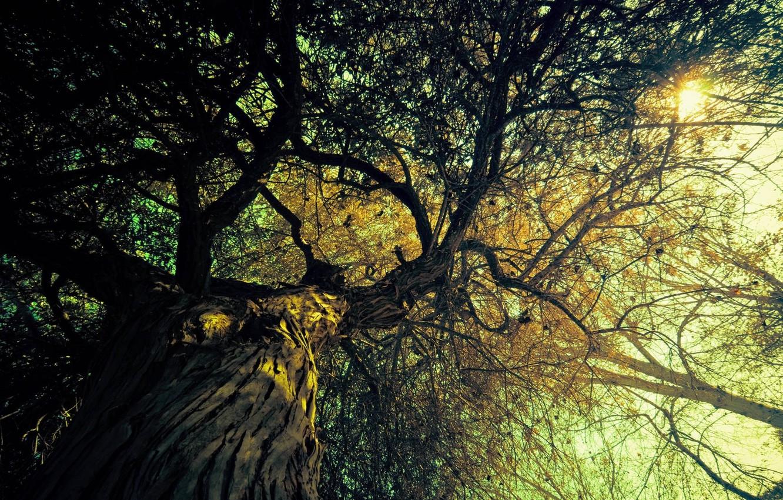 Фото обои солнце, свет, деревья, ветки, природа, фон, дерево, ветви, вид, лучи солнца