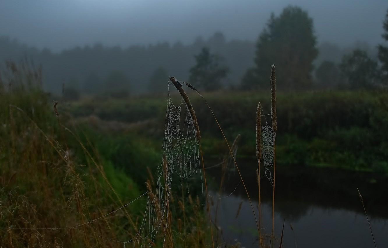 Фото обои капли, река, утро, Паутина