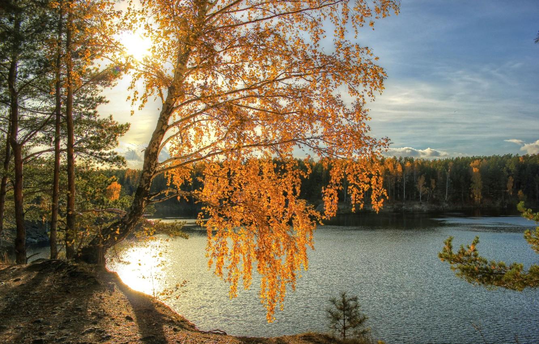 Фото обои осень, солнце, свет, река, береза