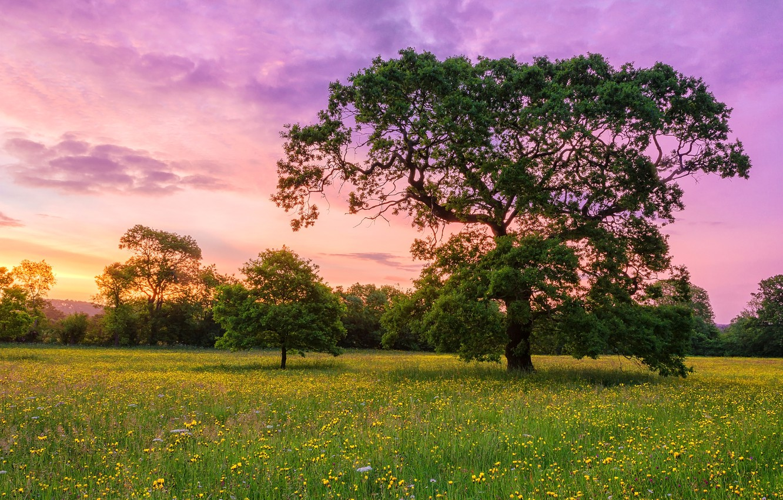 Фото обои небо, облака, цветы, дерево, луг