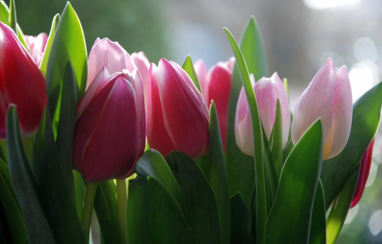 всегда фото с тюльпанами на телефон получаются только красивыми