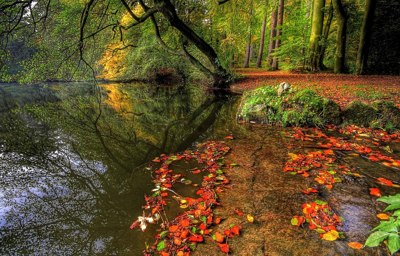 Фото обои осень, лес, вода, деревья, природа, растения, forest, trees, nature, water, autumn, leaves, rivers