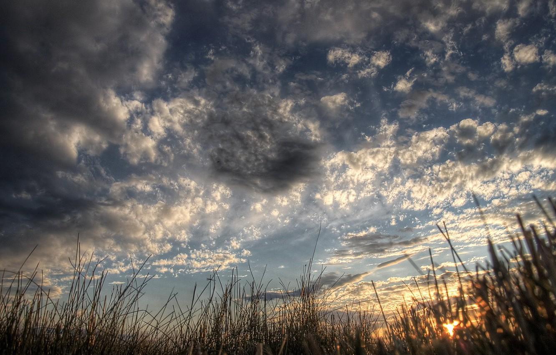 Фото обои лес, небо, ночь, восход, болото