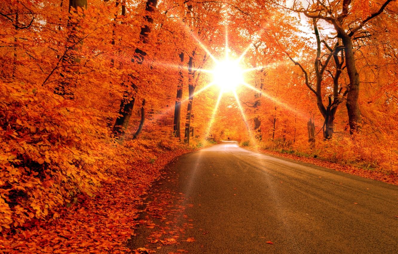 Фото обои дорога, лес, листья, солнце, лучи, деревья, Осень