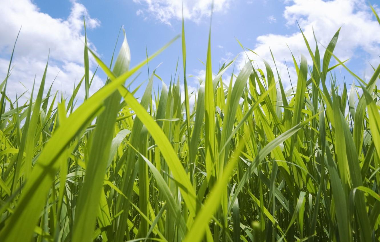 Фото обои небо, трава, макро