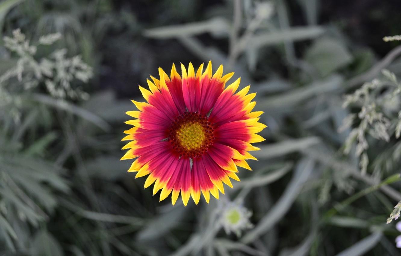 Фото обои природа, Цветок, лепестки