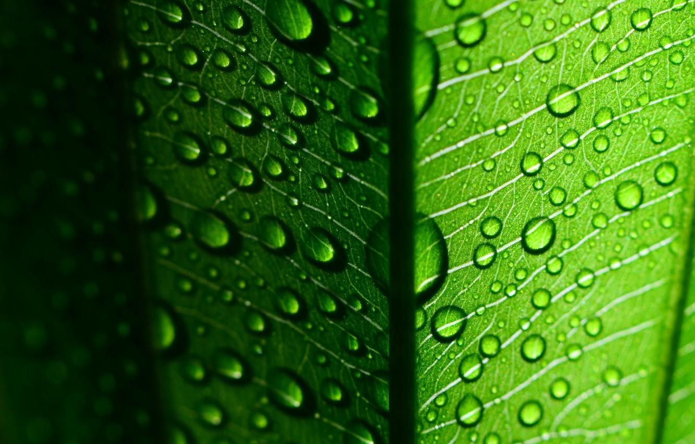 Фото обои листья, вода, капли, макро, зеленый, роса, фон, green, widescreen, обои, капля, листик, wallpaper, листочек, широкоформатные, …
