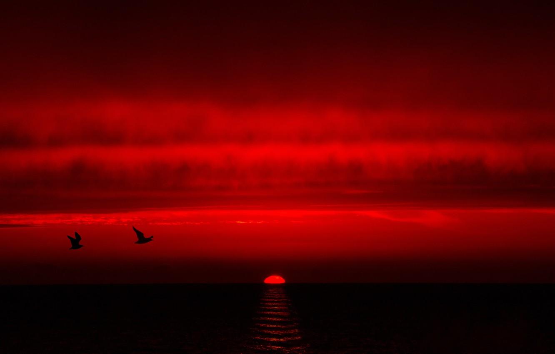 Фото обои море, небо, облака, закат, птицы