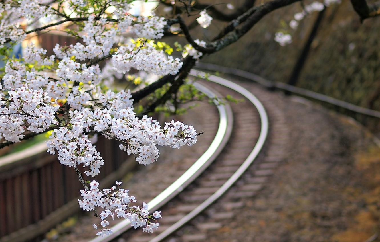 Фото обои макро, цветы, ветки, дерево, Япония, размытость, сакура, железная дорога