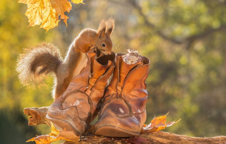 Фото обои осень, животные, листья, ботинки, мышь, белка, грызуны
