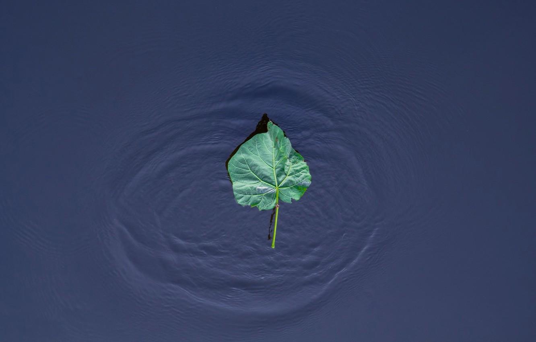 Фото обои вода, природа, лист