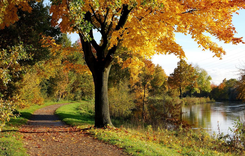 Фото обои осень, парк, дерево