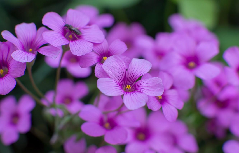 Показать цветочки фото
