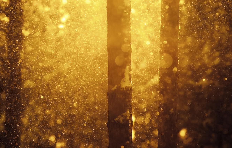 Фото обои зима, лес, снег, природа, Joni Niemela