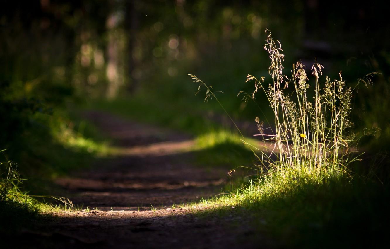 Фото обои дорога, трава, макро, свет, природа