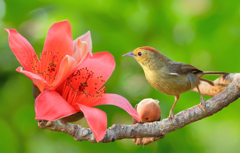 очень симпатично, птица с цветком картинки проволоку