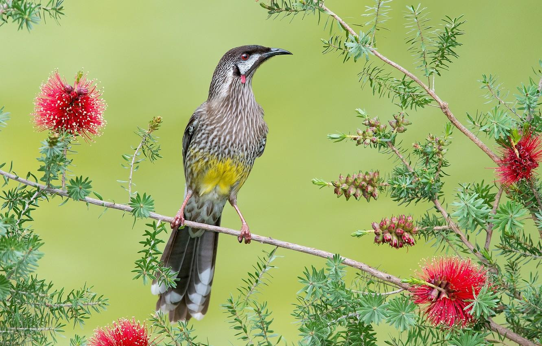 Фото обои цветы, птица, ветка, перья