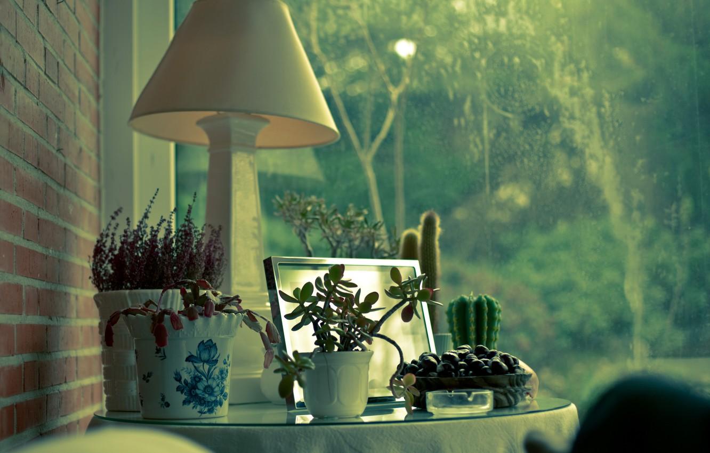 Фото обои дом, окна, лампа, растения, кактус