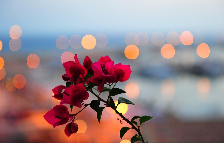 Фото обои листья, цветы, огни, ветка, лепестки, блик