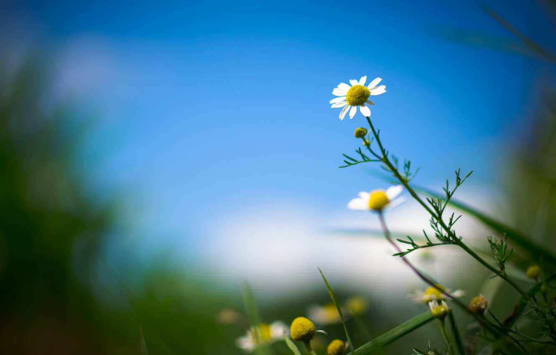 Обои размытость, цветы. Цветы foto 9