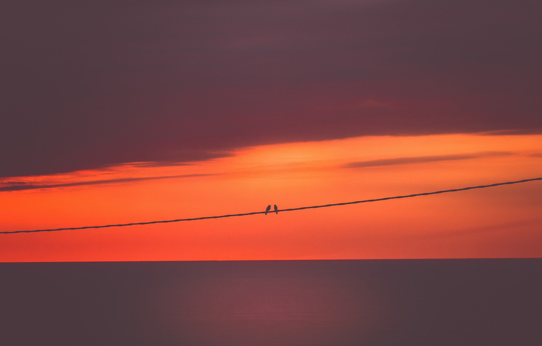 Фото обои небо, закат, птицы