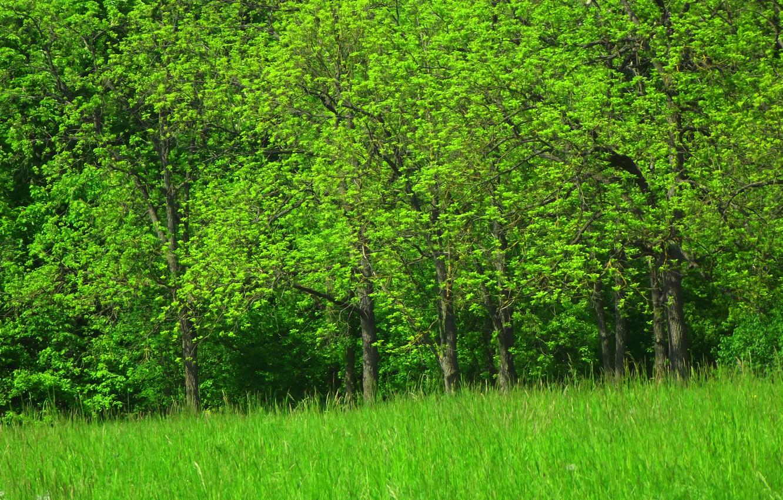 Фото обои Деревья, Пейзаш, Зёлёный