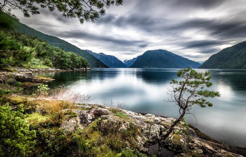 Фото обои деревья, горы, озеро, Норвегия, Dragsviki, Sognefjord