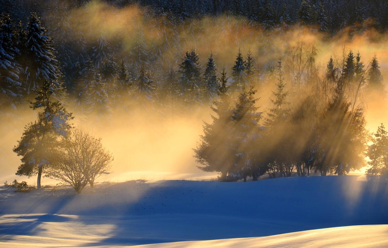 Фото обои лес, снег, пейзаж, утро