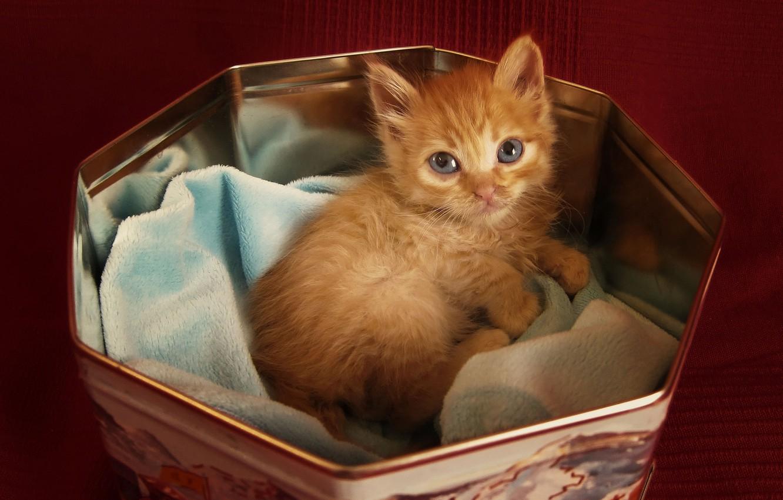 Фото обои взгляд, котенок, Кот, рыжий, лежит, в коробочке