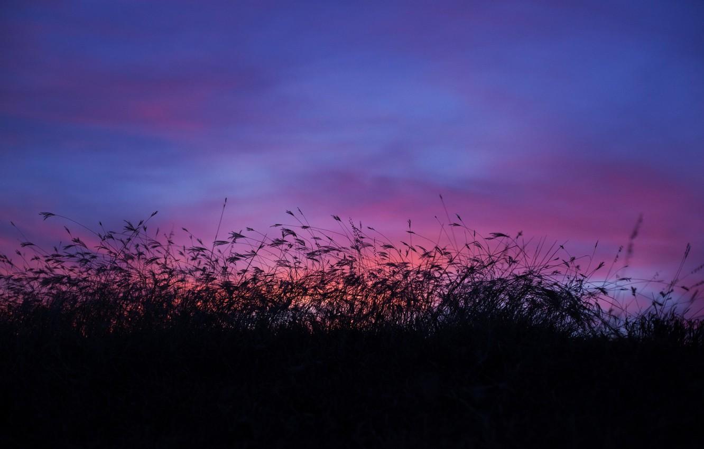 Обои высокая трава, сумерки, облака. Природа foto 6