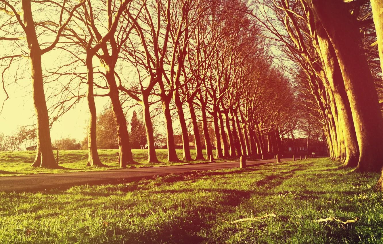 Фото обои трава, свет, деревья, свежесть, природа, дерево, село, вилла, вечер, деревня, посёлок, аллея, деревни, усадьба, аллеи, …