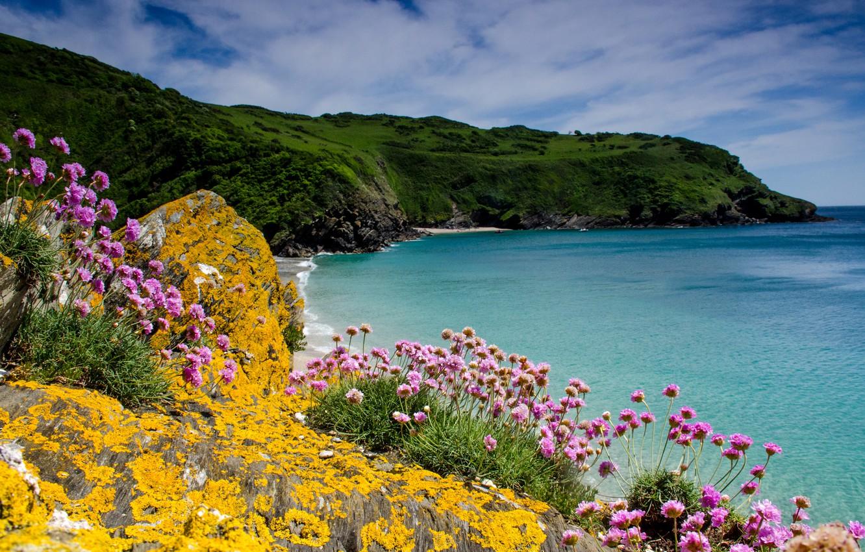 фото лето море и цветы абрамович