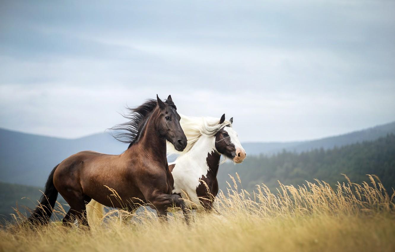 Фото обои поле, трава, облака, деревья, горы, ветер, стебли, лошади