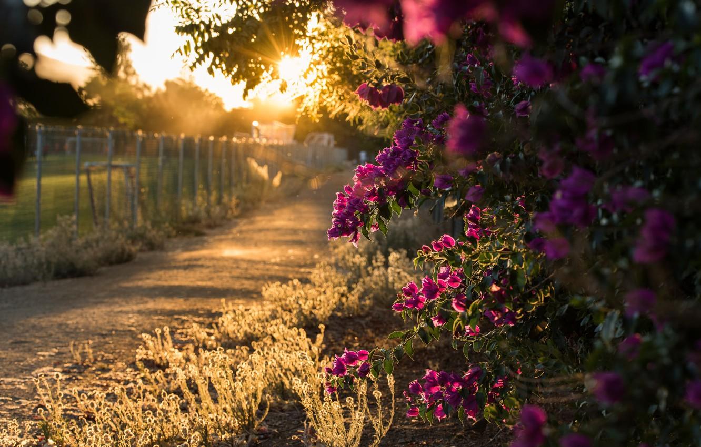 Фото обои свет, цветы, природа