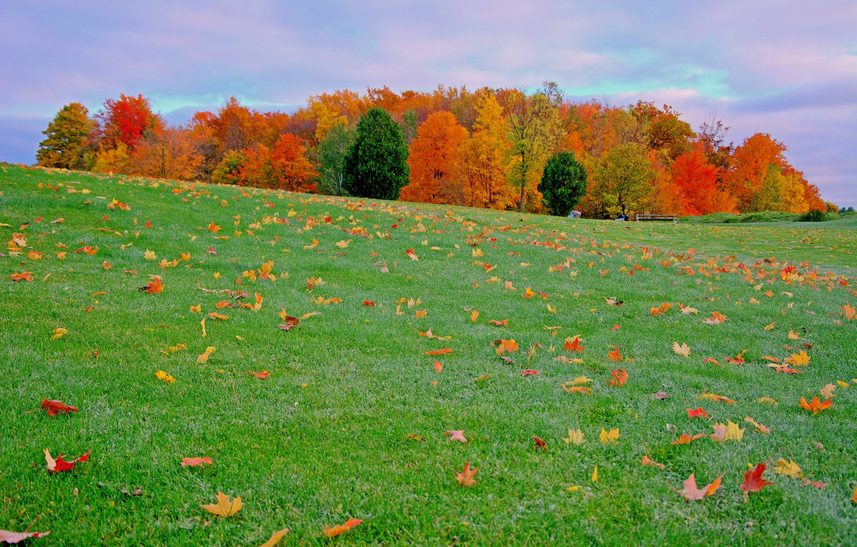картинка осенней полянки леса место может