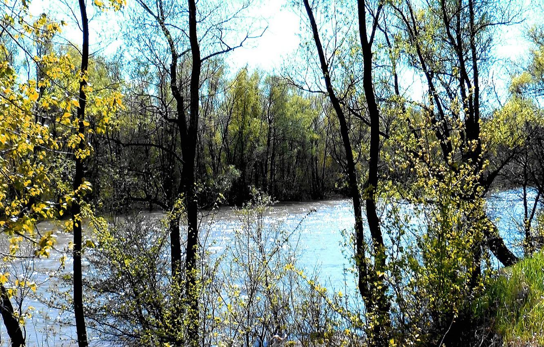 Фото обои берег, весна, Река, май