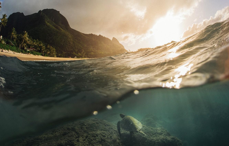 Фото обои море, океан, черепаха