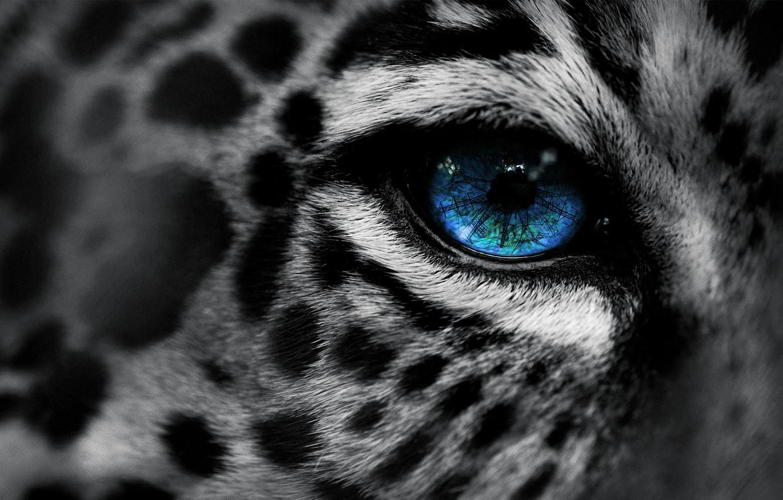 Фото обои макро, глаз, леопард, leopard, eye, Eg-Art