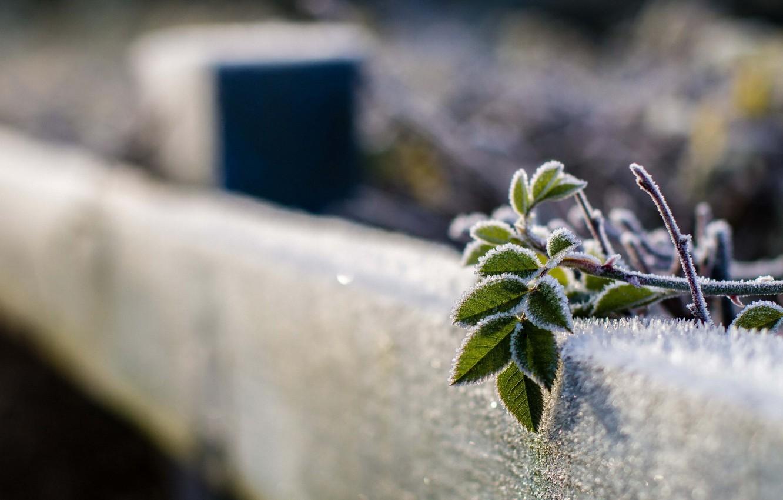 Фото обои листья, макро, забор