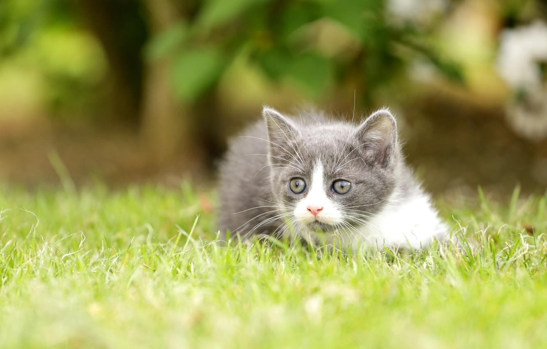Фото обои трава, взгляд, котёнок, боке
