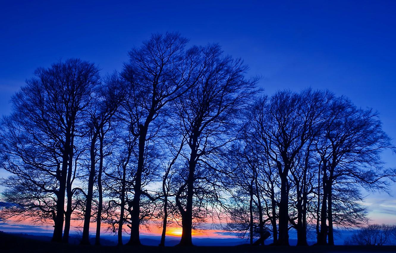 Фото обои поле, небо, деревья, закат, оранжевый, Вечер, сумерки, синее
