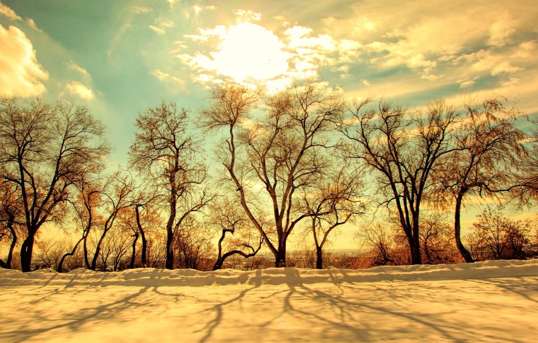 Фото обои зима, небо, солнце, свет, снег, деревья