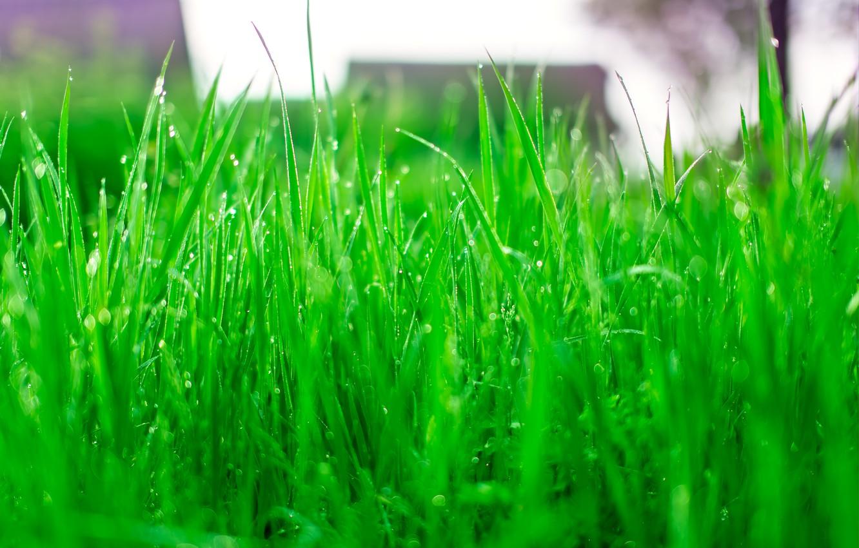 Летняя трава картинка