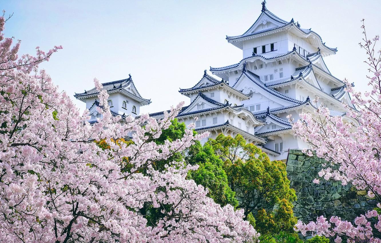 Фото обои деревья, замок, Япония, сакура, пагода